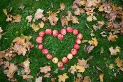 Pommes dans des feuilles de forme et d'automne de coeur sur l'herbe Image stock