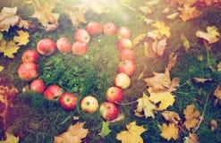 Pommes dans des feuilles de forme et d'automne de coeur sur l'herbe Photographie stock libre de droits