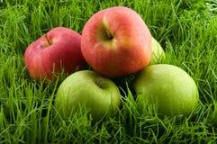 Pommes dans l'herbe. Photographie stock libre de droits