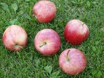 Pommes dans l'herbe Photo libre de droits