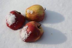 Pommes dans la neige dans un chapeau de neige de Images libres de droits