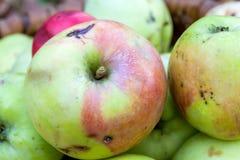 Pommes dans le jardin d'automne Image stock