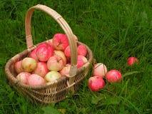 Pommes dans le panier Image stock