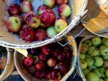 Pommes dans les paniers époussetés avec la neige fraîche Image libre de droits