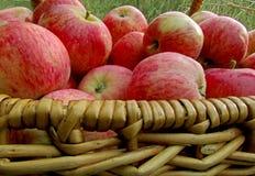 Pommes dans un panier Images stock