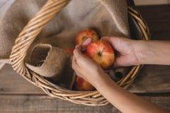 Pommes dans un panier en osier images stock