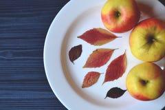 Pommes dans un plat blanc sur une table en bois Pommes mûries Décor de feuilles d'automne Images stock