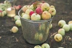 Pommes dans un seau photos stock