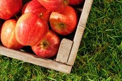 Pommes dans une caisse sur l'herbe Photo stock