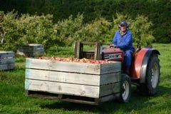 Pommes de Braeburn photo libre de droits