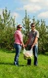 Pommes de cueillette de couples Image libre de droits