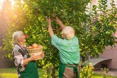Pommes de cueillette de femme et d'homme Photos stock