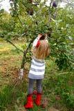 Pommes de cueillette de jeune fille Photo stock