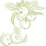 Pommes de dessin et branche monochromes de pomme Photos libres de droits