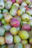 Pommes de Fuji Image libre de droits