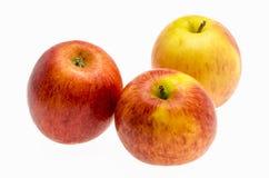 Pommes de gala au-dessus du fond blanc Image stock