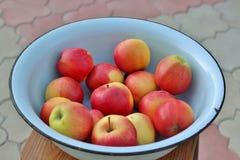Pommes de gala dans la cuvette en métal images stock