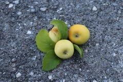 Pommes de montagne Photographie stock