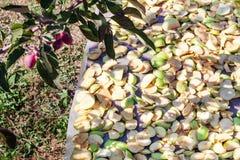 Pommes de paradis et morceaux de pommes Photos stock