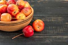 Pommes de Paradise dans une cuvette image libre de droits
