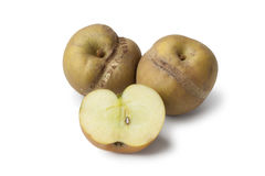 Pommes de Patte de loupe Photographie stock libre de droits