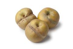 Pommes de Patte de loupe Photos stock