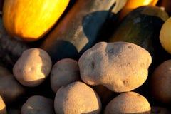 Pommes de terre Photos stock