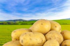 Pommes de terre, bio produit Photos stock