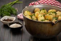 Pommes de terre cuites au four de bébé avec l'aneth, le sel et le poivre frais Image libre de droits