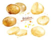 Pommes de terre d'aquarelle