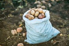 pommes de terre d'isolement blanches Photo libre de droits