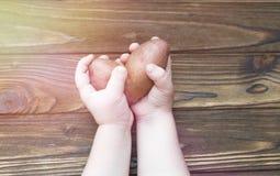 Pommes de terre dans des mains sur un fond en bois Photo libre de droits