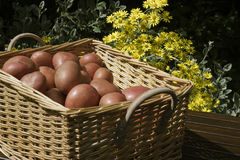 Pommes de terre dans le panier Photos libres de droits