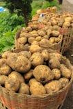 Pommes de terre dans les paniers après agriculture Photographie stock libre de droits