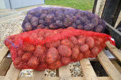 Pommes de terre dans les sacs Photo stock