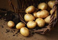 Pommes de terre dans un panier en osier avec le sol - style rustique Images libres de droits