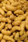 Pommes de terre de poisson jeune Image stock