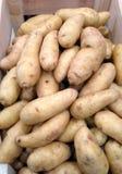 Pommes de terre de poisson jeune Photos stock