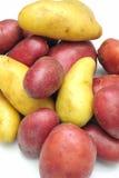 Pommes de terre de poisson jeune Image libre de droits