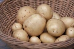 Pommes de terre de primeurs Casablanca Photographie stock libre de droits