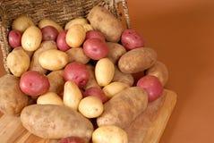 Pommes de terre de reinette, rouges et blanches se renversant hors d'un panier sur la coupure Images libres de droits