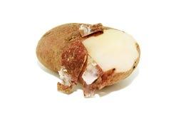 pommes de terre en robe de chambre bouillies leurs Photo stock