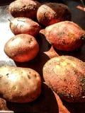 Pommes de terre fraîches Pommes de terre jaunes Fond de pommes de terre photo stock