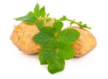 Pommes de terre jaunes avec des lames Images stock