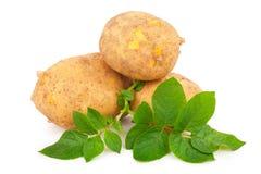 Pommes de terre jaunes avec des lames Images libres de droits