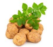 Pommes de terre jaunes avec des lames Photo stock