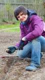Pommes de terre plantées par main intéressante de femme Images libres de droits