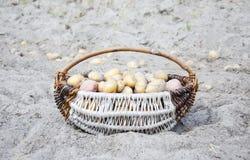 Pommes de terre de primeurs rassemblées dans un cercueil Images libres de droits