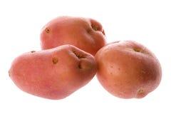 Pommes de terre roses d'isolement Photo stock