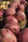Pommes de terre rouges Image libre de droits
